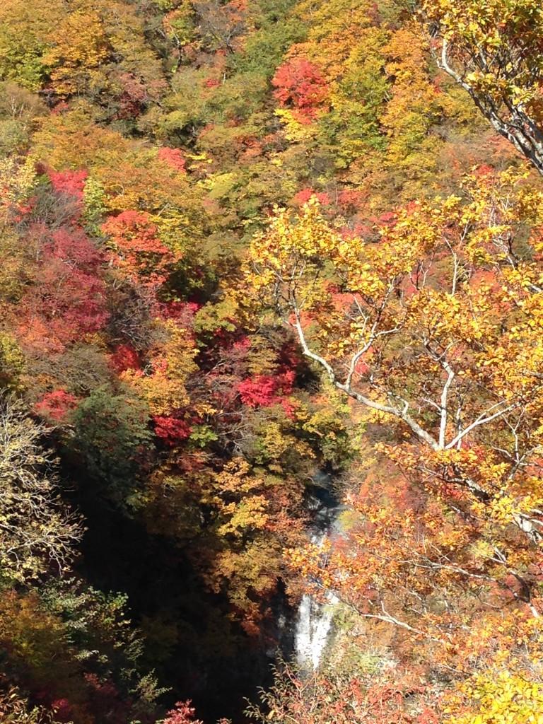 栃木 那須 駒止の滝 こまどめのたき 紅葉
