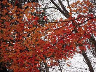 栃木 那須平成の森 日光国立公園 観察会 紅葉