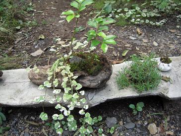 栃木 那須高原 苔屋 こけや 緑のインテリア