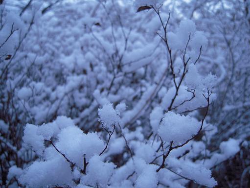 栃木 那須高原 ペンショントント 冬 雪