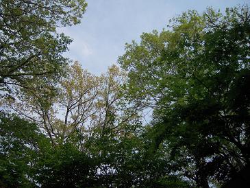 栃木 那須高原 ペンショントント 空