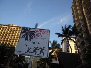 ハワイ ココナッツ落下注意