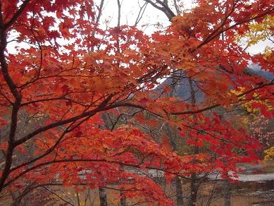 福島 下郷 観音沼森林公園 紅葉