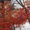 【那須】「那須平成の森」自然観察会に行ってきました